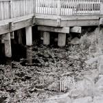 bridge-fd-1